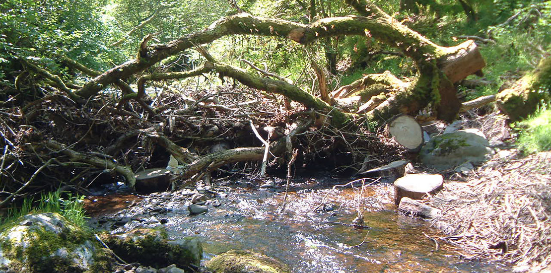 JBA Holnicote Leaky Barrier woody debris - Working With Natural Processes